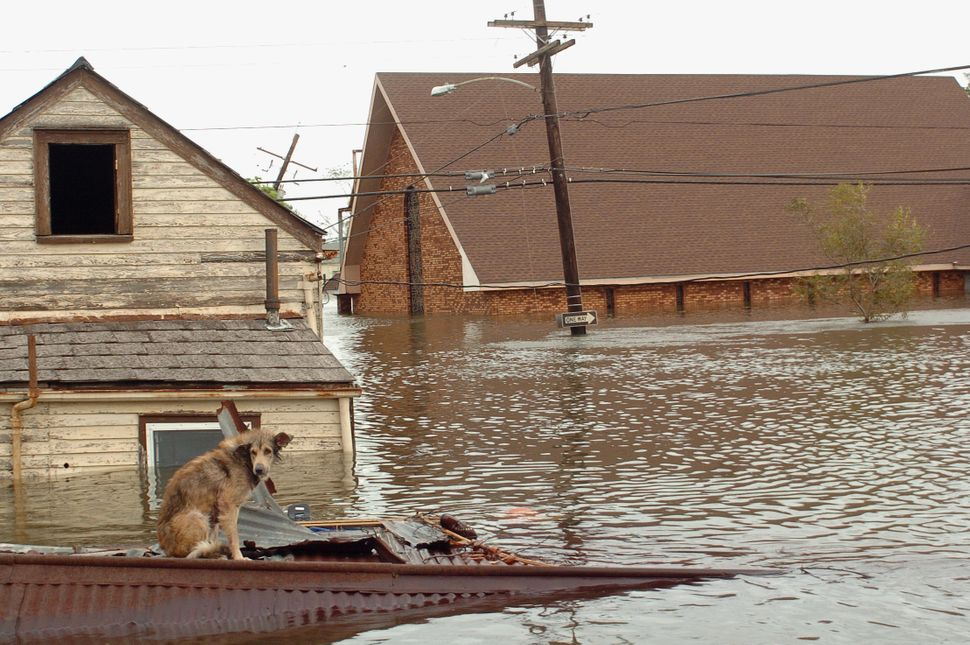 A dog sits stranded on a rooftop in the flooded Lower 9th Ward neighborhood in New Orleans on Aug. 29, 2005.