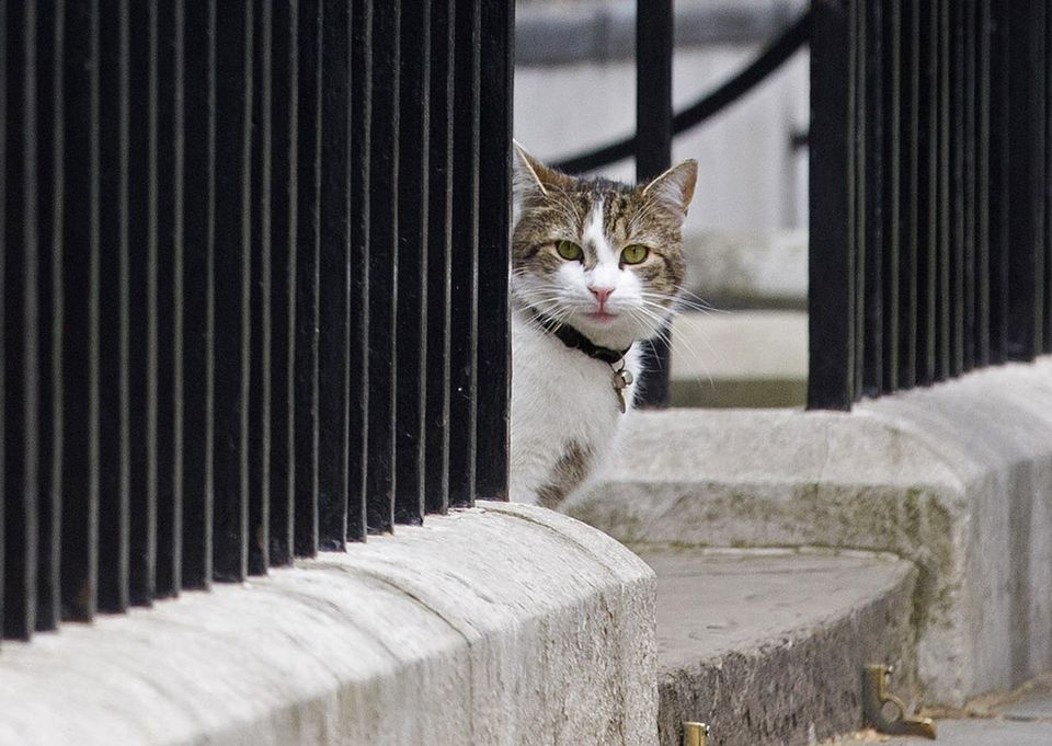 The cat of then-British Prime Minister David Cameron sits on the step outside 10 Downing Street in London on May 9, 2015.
