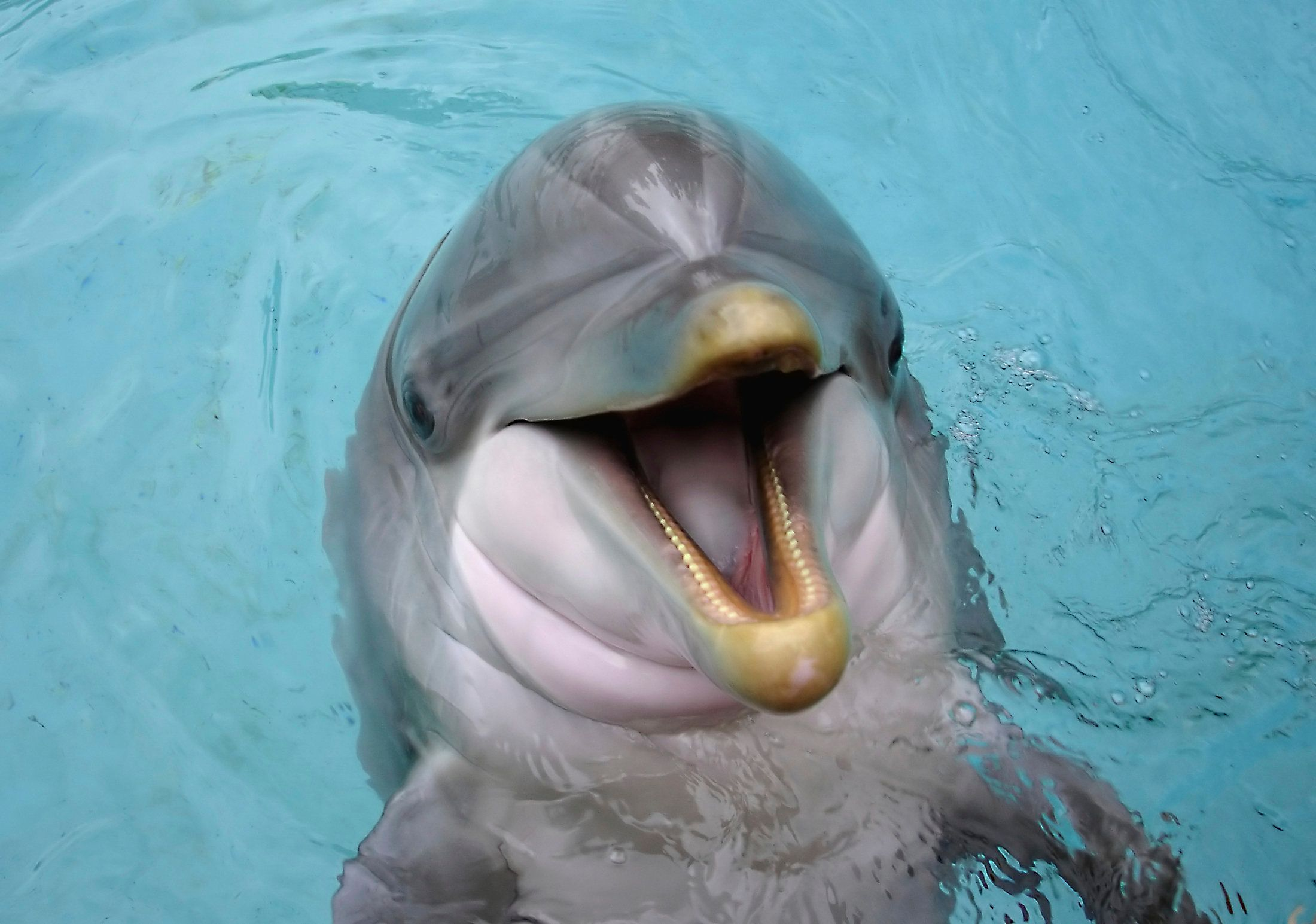 Man give oral sex to dolphin
