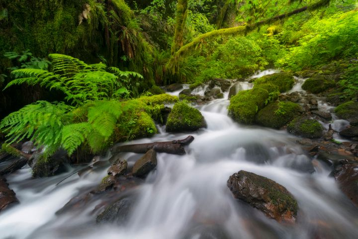 Daily Meditation: The River Is Flowing