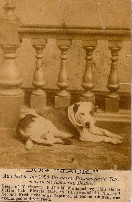 A newspaper clipping featuring Dog Jack.