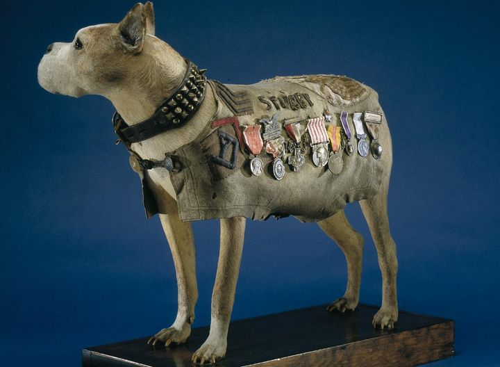 <span>Sgt.&nbsp;Stubby's skin was preserved and stretched over a plaster cast, and is displayed at the Smithsonian's National