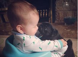 Baby And His Pug Friends Have Some Seriously Cute Cuddle Sessions
