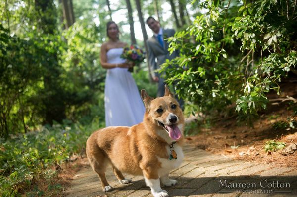 "Credit:&nbsp;<a href=""http://maureencottonweddings.com/index2.php?v=v1"">Maureen Cotton Photography</a>"