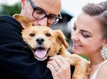 30 Times Dogs Made Weddings Exponentially Cuter