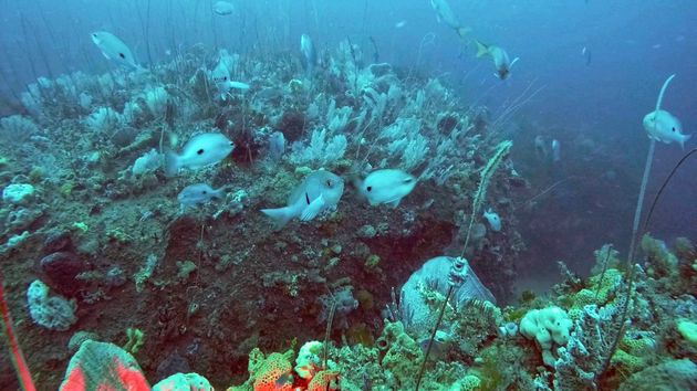 New Underwater Discovery Gives The Great Barrier Reef A Run For Its
