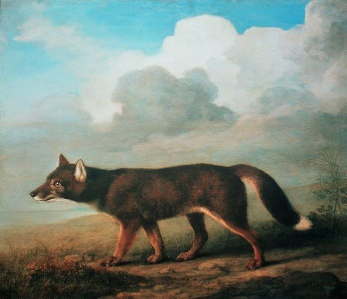 """<a href=""""https://en.wikipedia.org/wiki/File:George_Stubbs,_A_portrait_of_a_large_Dog_from_New_Holland_(Dingo),_1772.jpg"""">Geor"""