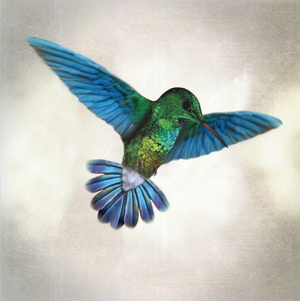 """Hummingbird Totem,"" digital composition"