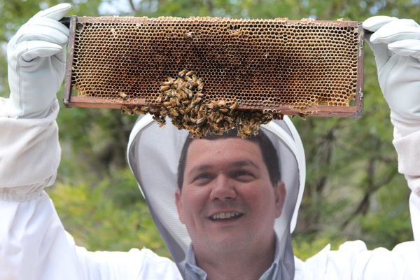 Dr Paulo de Souza and beesScientists check bee hives in Tasmania's Huon Valley.
