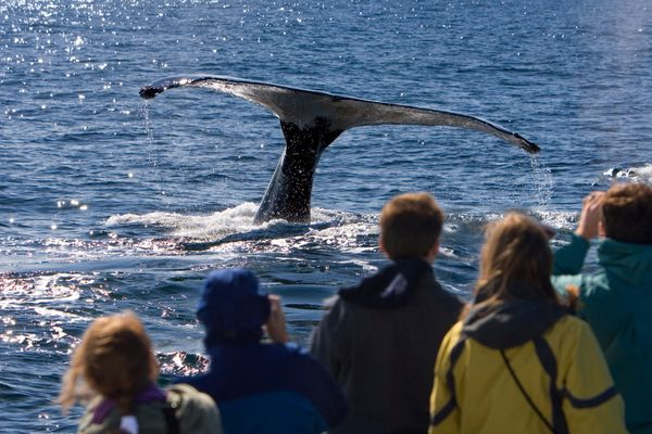 """Most people don't know that Massachusetts has been named<a href=""""http://www.huffingtonpost.com/2011/04/06/10-best-whale"""