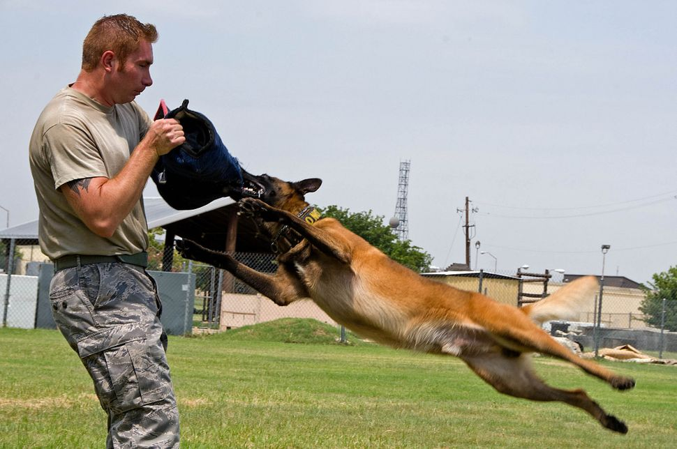 Tech. Sgt. Shawn Rankins and military working dog Eespn demonstrate aggression training Aug. 4, 2015, at Sheppard Air Force B