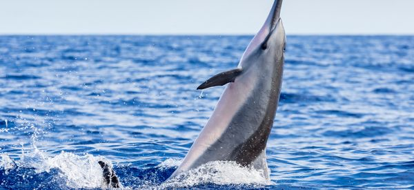 Horrible Idea Of The Week: Dolphin-Assisted Birth