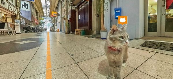 'Cat Street View' Offers A Cat's-Eye View Of The World