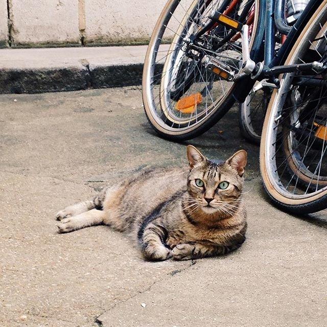 A cat in Paris, France.