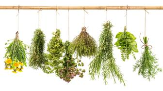 Fresh herbs isolated on white background. Hanging bunches of dill, basil, rosemary, thyme, oregano, marjoram, dandelion. Tasty food ingredients