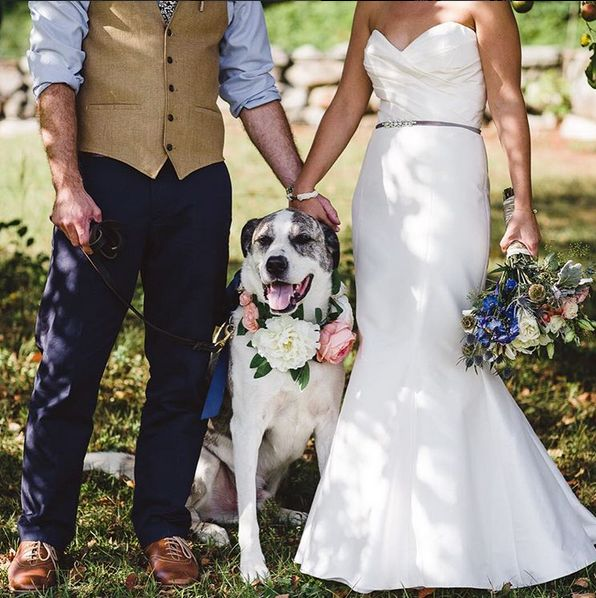 """""""Happily ever after with man's best friend!"""" - Amy Marie"""