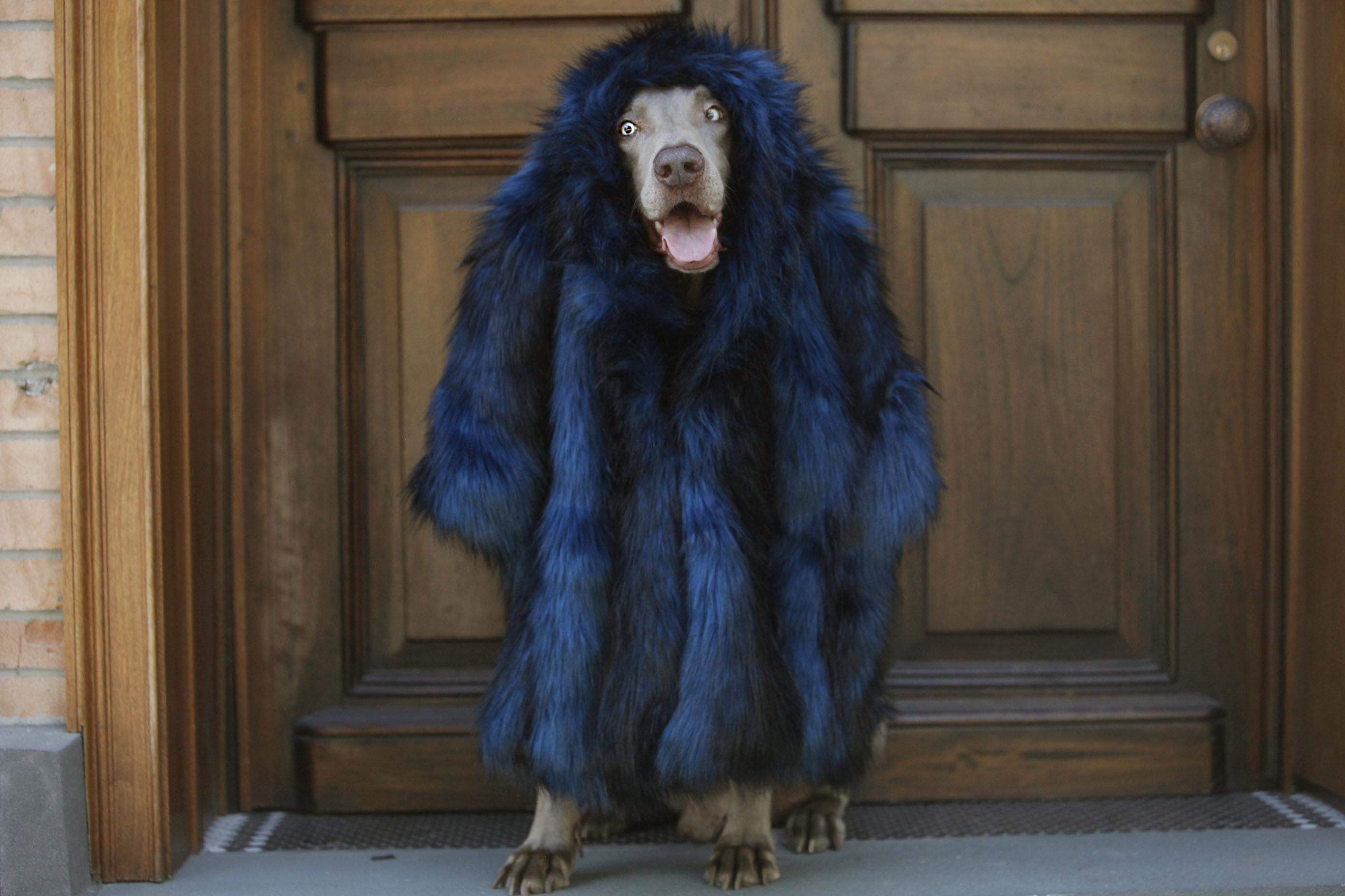 Guga looks gorgein this faux fur Cynthia Rowley coat (too shy for Instagram).