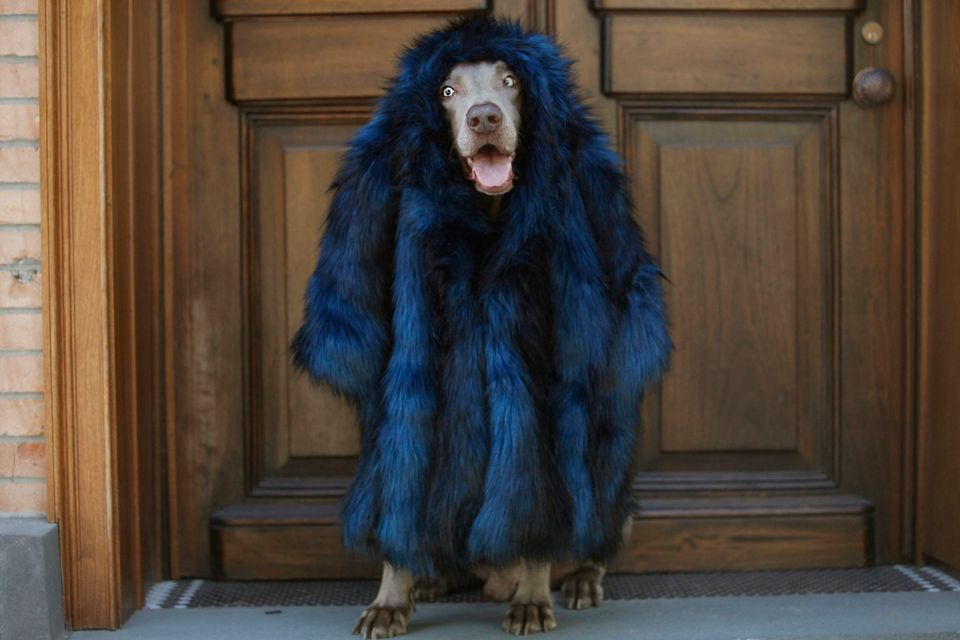 Guga looks gorge in this faux fur Cynthia Rowley coat (too shy for Instagram).