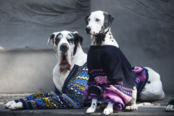 """Druk and Charlie are in it 2 win it&nbsp;in their sweaters from Beacon's Closet (IG: <a href=""""https://instagram.com/deafdal/"""""""