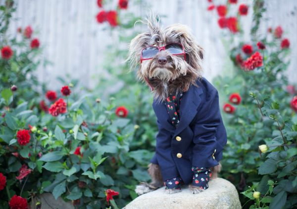 Rosenberg is too cool for schoolin his Louis Vuitton sunglasses, Ralph Lauren blazer and Dolce & Gabbana shirt&nbsp