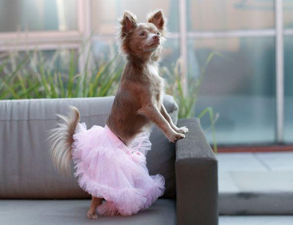 "Zoey is&nbsp;graceful&nbsp;in a tutu from Baby Essentials (IG: <a href=""http://www.instagram.com/zoeyblitz"">@zoeyblitz</a>)."