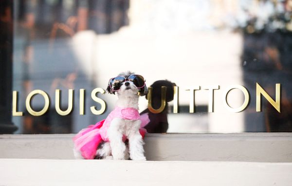 """Tinkerbelle is throwing shade&nbsp;in her dress from Doggie Diva Boutique and Valentino sunglasses&nbsp;(IG: <a href=""""https:/"""