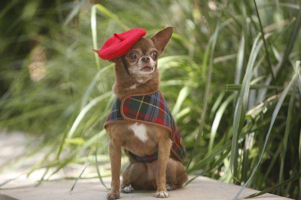"""Chloe&nbsp;wears a Coach dress and a beret by Dog In A Fez (IG: <a href=""""http://www.instagram.com/chloekardoggian"""">@chloekard"""