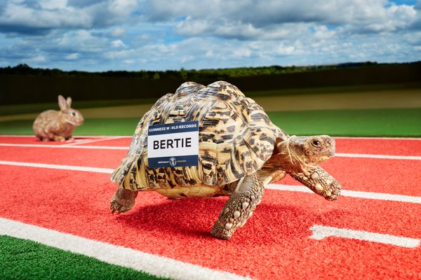 The fastest tortoise on Earth is Bertie, who ran 9/10s of a foot in a second on July 9, 2014.