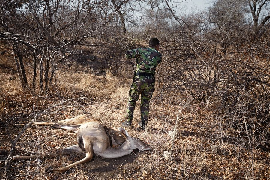 A young Kudu is found dead. Yenzekile reports its location and situation of events to the control room.