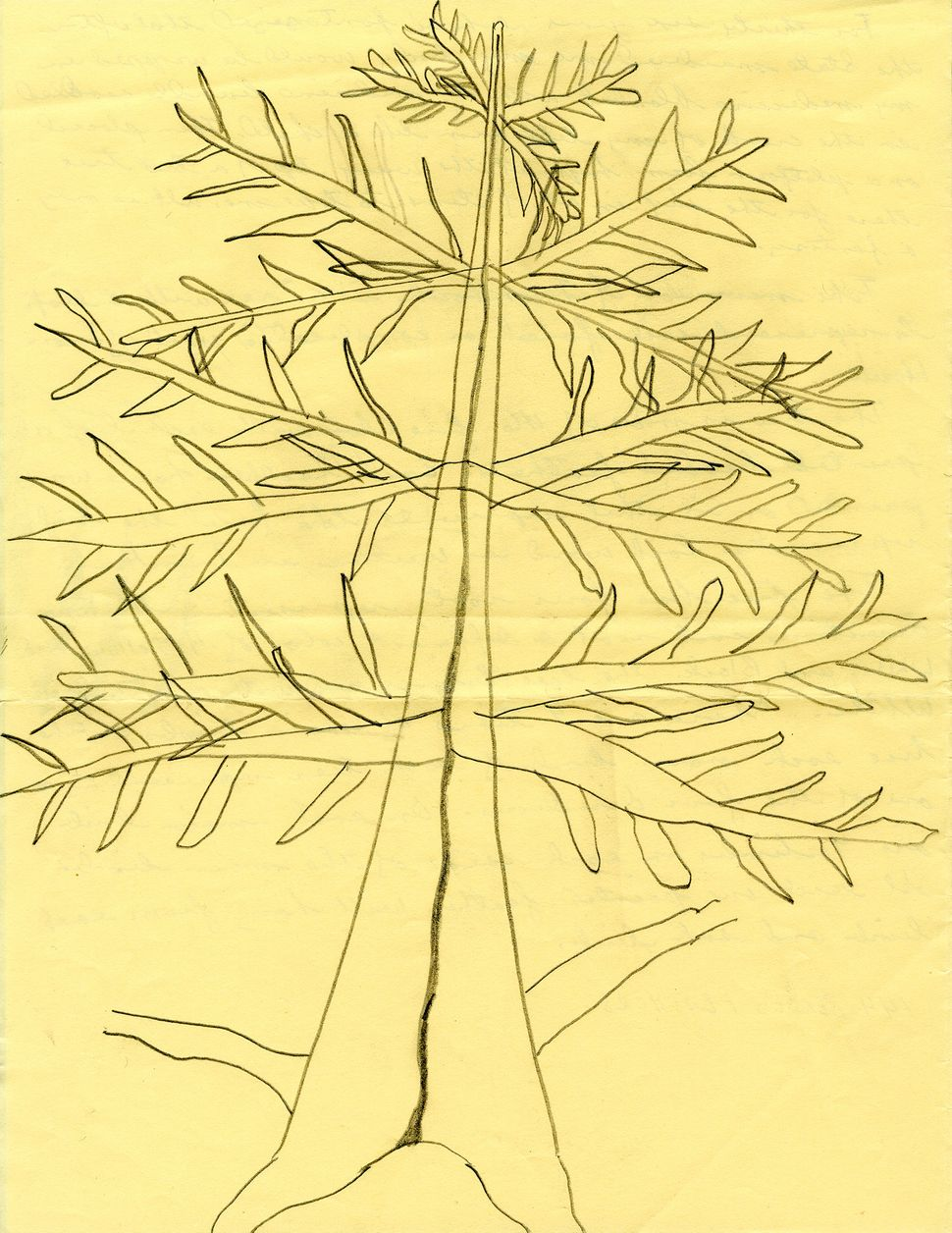 Drawing for a Tree, 2015, Pencil on paper