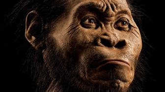 <p>A reconstruction of<em> Homo naledi's</em> head by paleoartist John Gurche, who spent some 700 hours recreating the head from bone scans. </p>