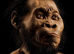 New Species Of Human Relative Discovered In South African Cave