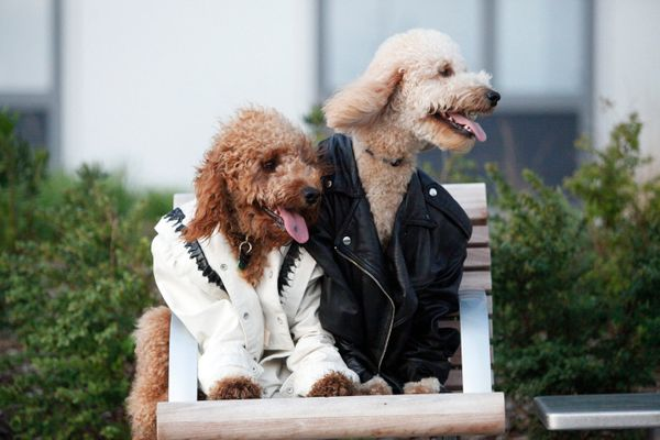 """Hudson and Samson are breaking hearts in their vintage jackets from Beacon's Closet (IG: <a href=""""https://instagram.com/hudso"""