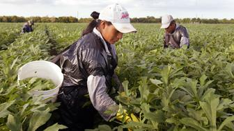 <p>A woman works in a field. On Thursday, five migrant workers who say their bosses raped and harassed them were awarded $17 million in an EEOC lawsuit.</p>