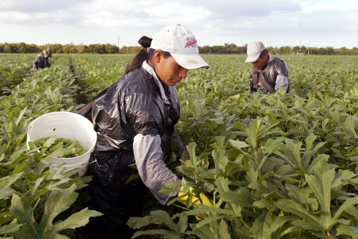 A woman works in a field. On Thursday, five migrant workers who say their bosses raped and harassed them were awarded $17 mil