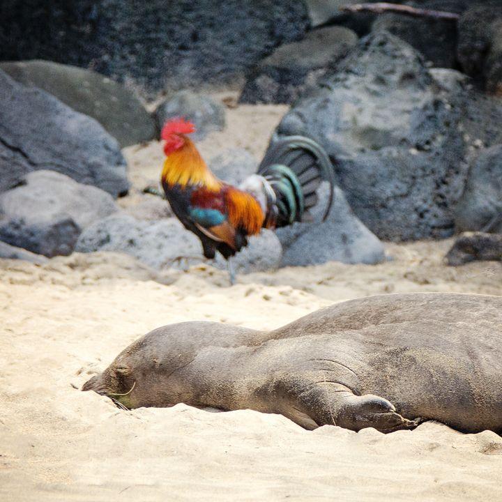 A Hawaiian monk seal anda rooster at Ke'e Beach, on Kauai'snorth shore.