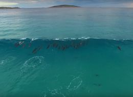 Dreamy Dolphin Surf Squad Has Us Longing For An Endless Summer