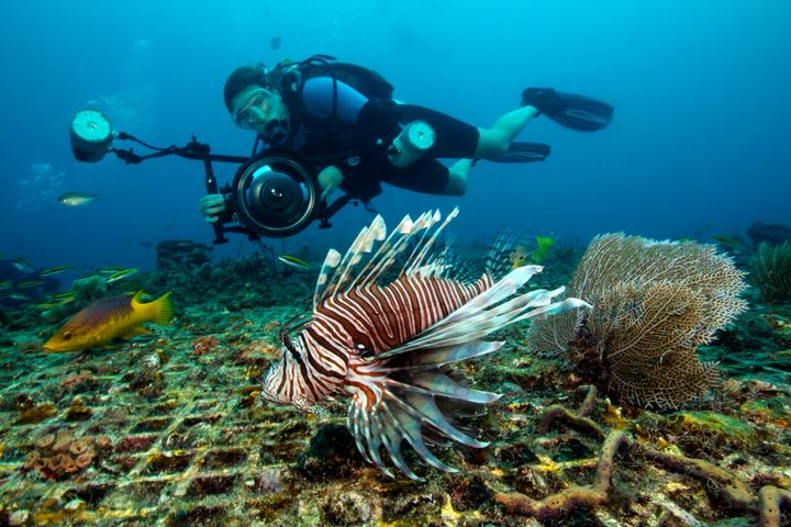 Lionfish are considered one of the most aggressively invasive species on the planet.
