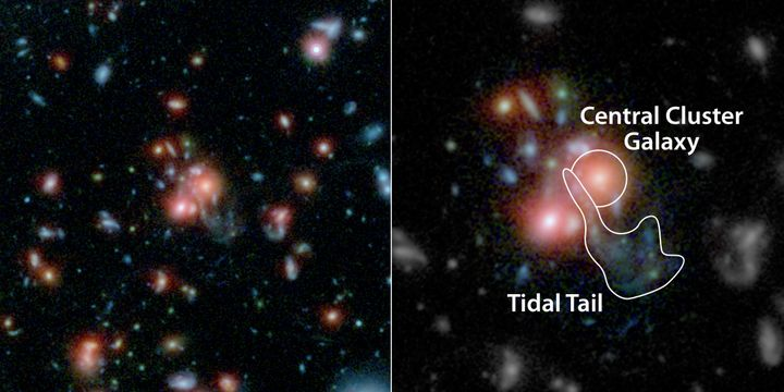 A massive cluster of galaxies, called SpARCS1049+56, can be seen in this multi-wavelength view from NASA's Hubble and Spitzer
