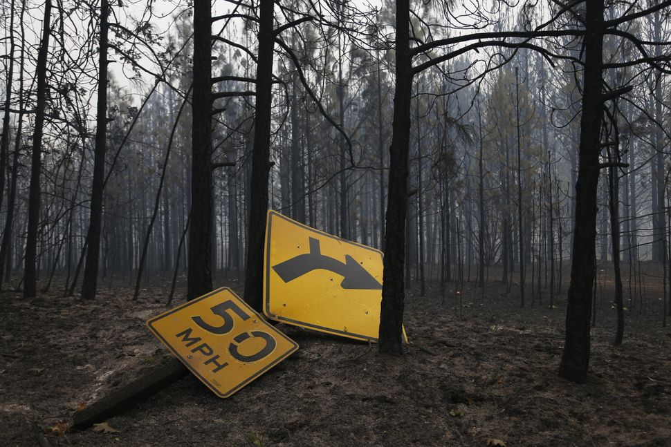 A fallen sign lies near a long a line of burnt trees by State Route 175 in Middletown, California, Sept.13, 2015.