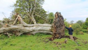 A skeleton was found under a tree in Ireland.