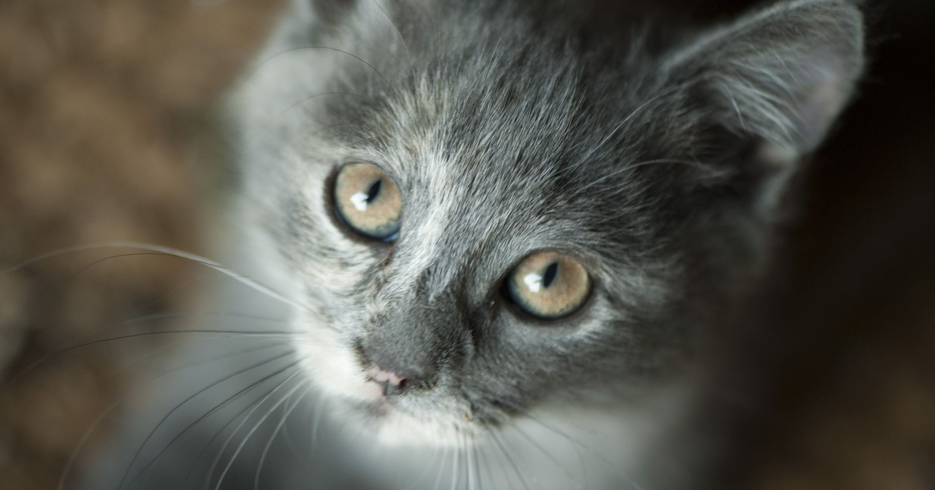 Myths About Cats That Aren T True