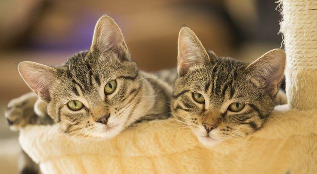Cats Aren't Evil: 5 Feline Myths That Just Aren't