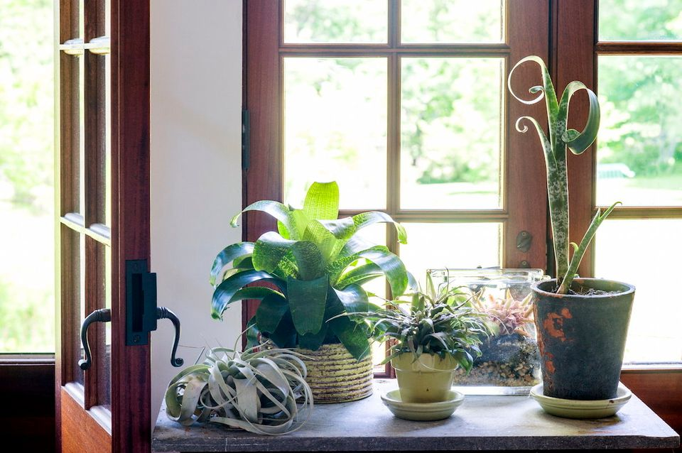 """If the plant is home alone a lot,"" Martin recommends air plants for anyone who can't (or forgets) to water them th"