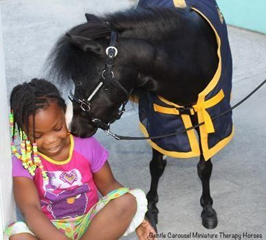 Miniature Therapy Horses Are Just What The Doctor