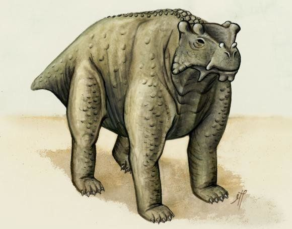 About the same size as a cow, this pre-reptile also stood the same way — upright with its legs underneath. It may be th