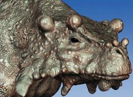 Knobby-Faced Beast Is Earliest Known To Have Walked Upright