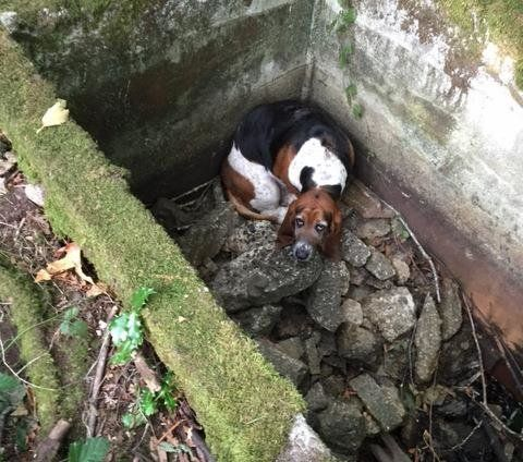 Phoebe, inside the cistern before rescuers helped her out.