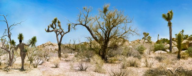 """<span class='image-component__caption' itemprop=""""caption"""">A woman painted as a Joshua Tree using body paints, body glue and dried cut palm leaves in Joshua Tree National Park, California.</span>"""