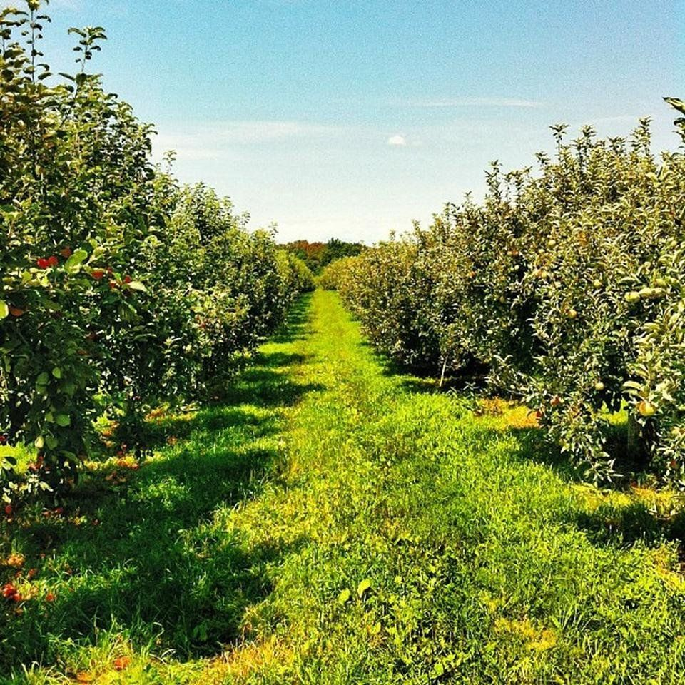 The 10 Best Places For Apple Picking In America